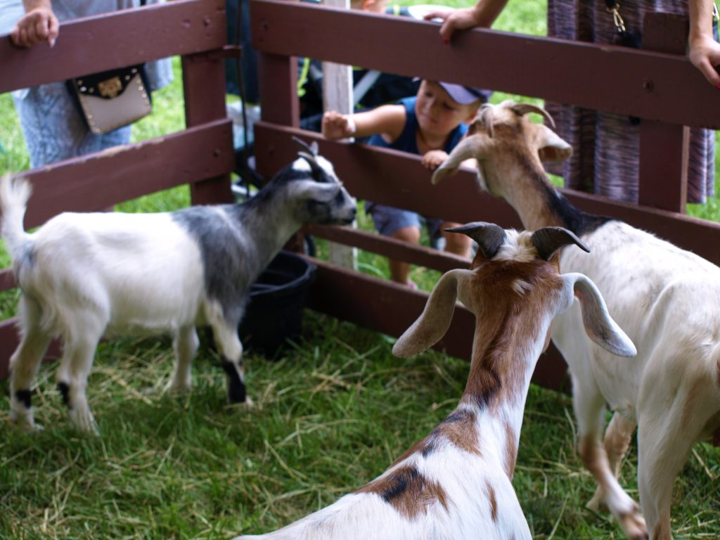 Petting zoo at the Blueberry Festival in Bethlehem, PA, a Trail Town along the D&L